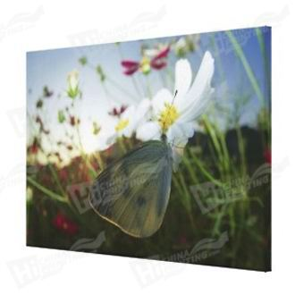 Butterfly And Flower Canvas Printing