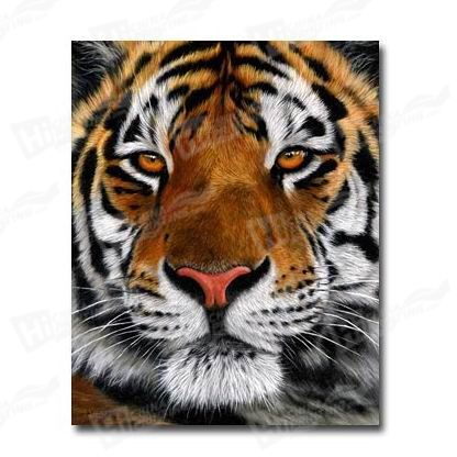 Tiger Canvas Printing